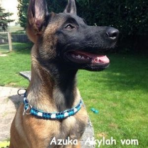Azuka - Akylah vom Buxehuder Bullen
