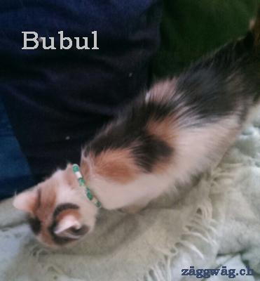 Bubul mit einem Katzenhalsband; gefertigt mit Loom Band