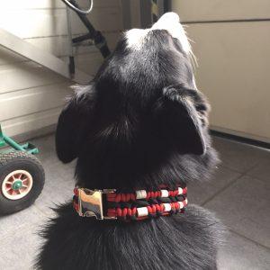 DOUBLE Zeckenschutzhalsband rot & schwarz