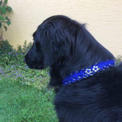 Rescue Zeckenschutzhalsband  in Blau & Silver Diamond