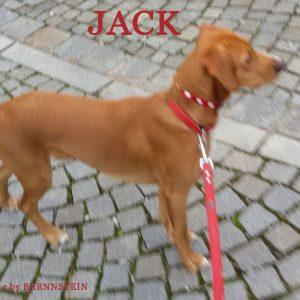 Welpe Jack
