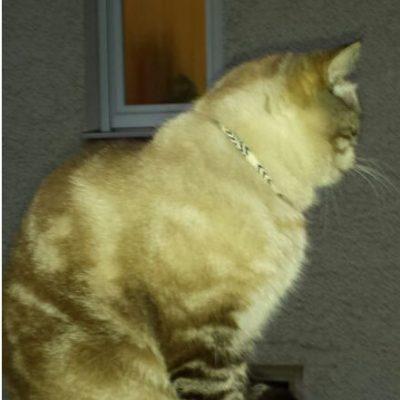 Max mit EM Katzenhalsband