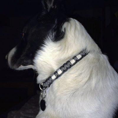 Rocko mit Zeckenschutzhalsband in den Farben schwarz / SilberDiamonds