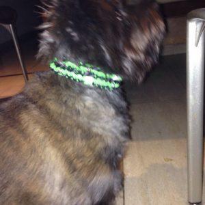 SHIRA trägt ein GLOW IN THE DARK Halsband