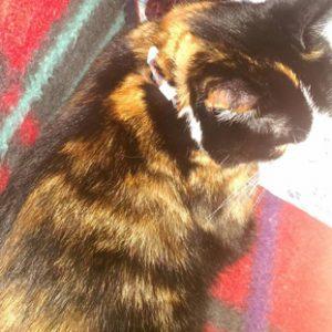 Zwirbeli mit einem Katzenhalsband; gefertigt mit Loom Band