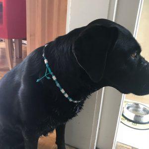 Natürlicher Zeckenschutzkette für Hunde. EM Keramikperlen