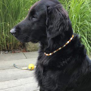 Natürlicher Zeckenschutzkette für Hunde. EM Keramikperlen und Rohbernstein